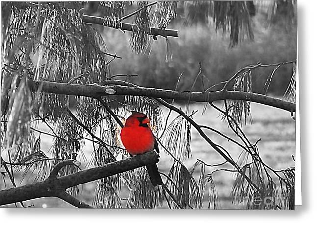 A Touch Of Red Greeting Card by Concolleen's Visions Smith