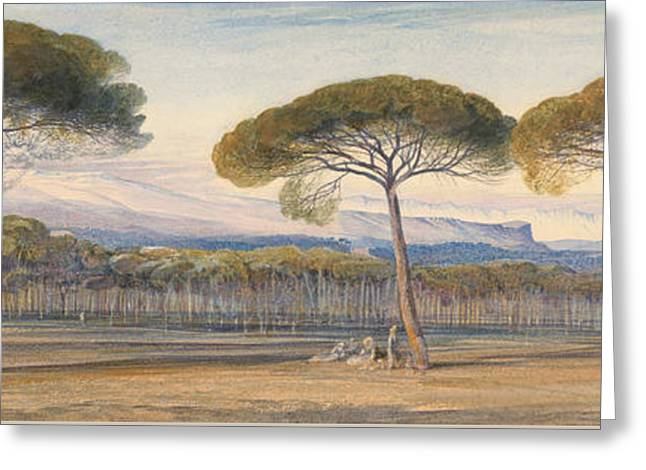 A View Of The Pine Woods Above Cannes Greeting Card