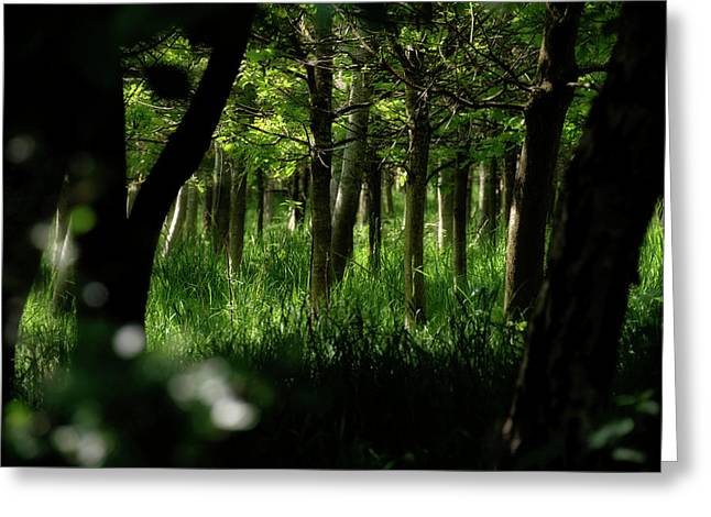 Greeting Card featuring the photograph A Walk In The Woods by Jeremy Lavender Photography