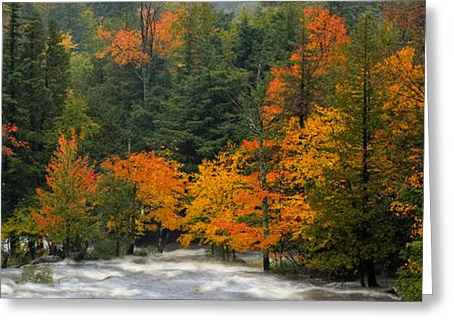 Adirondack Colors Greeting Card by Brad Hoyt