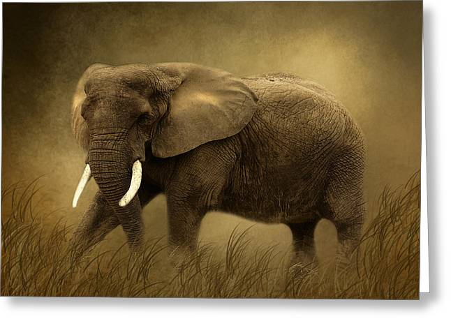 African Elephant Greeting Card by TnBackroadsPhotos