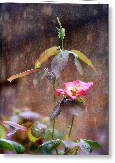 After The Rain Greeting Card by Joan Bertucci
