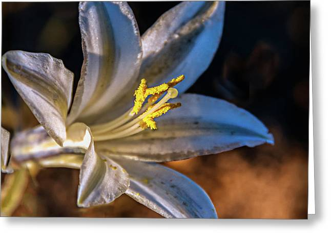 Greeting Card featuring the photograph Ajo Lily by Robert Bales