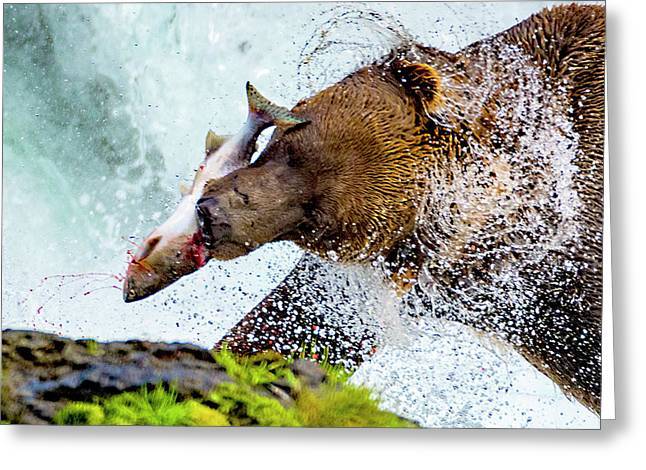 Greeting Card featuring the photograph Alaska Brown Bear by Norman Hall