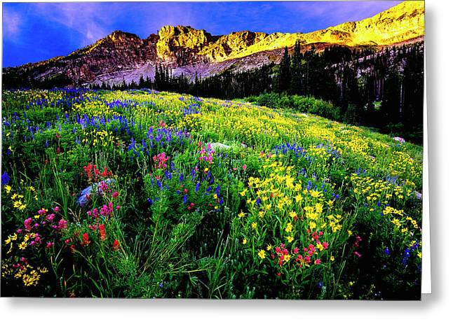 Greeting Card featuring the photograph Albion Basin by Norman Hall