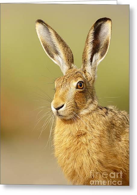 All Ears Greeting Card