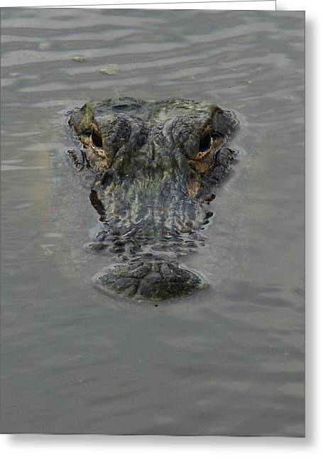 Alligator One Greeting Card