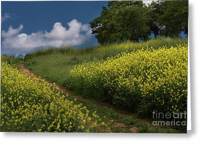 Almaden Meadows' Mustard Blossoms Greeting Card