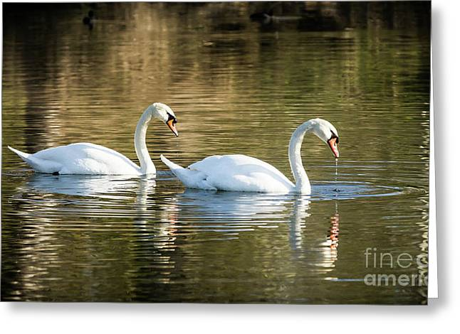 Always Together Wildlife Art By Kaylyn Franks Greeting Card