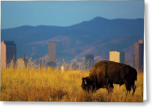 American Bison And Denver Skyline Greeting Card