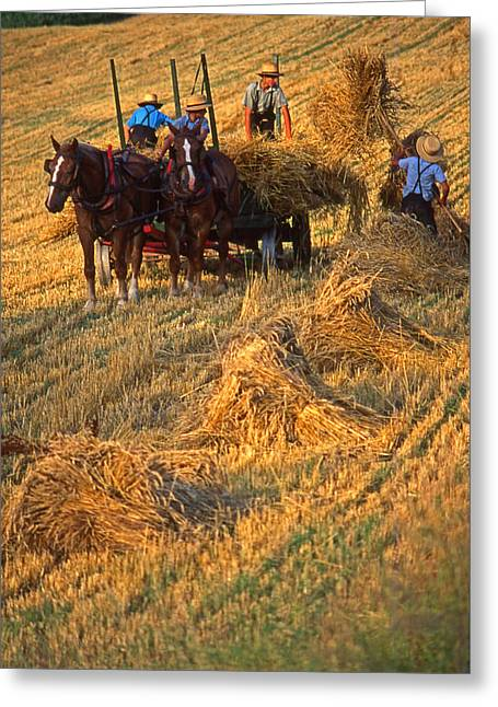 Amish Boys Wheat Harvest  Greeting Card
