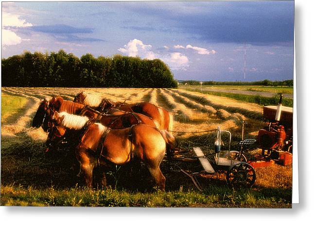 Amish Hay Rig Greeting Card