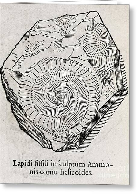 Ammonite Fossil, 16th Century Greeting Card
