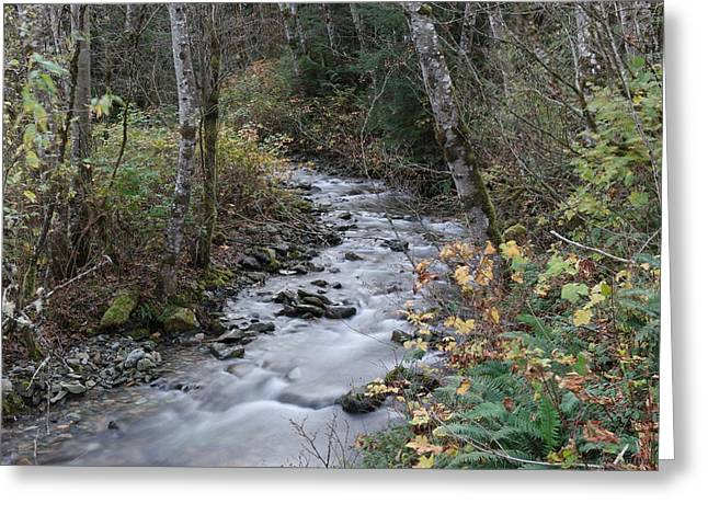 Greeting Card featuring the photograph An Autumn Stream by Jeff Swan