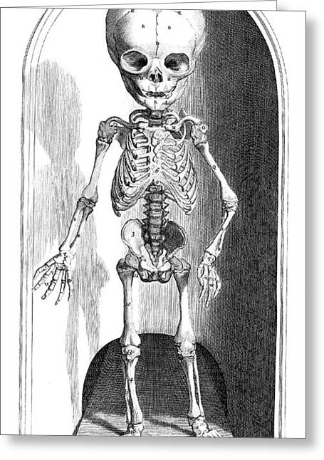 Anatomia Humani Corporis, Table 101 Greeting Card