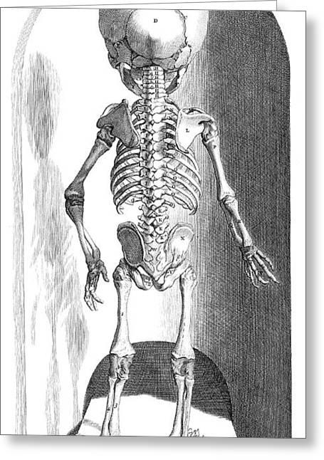 Anatomia Humani Corporis, Table 102 Greeting Card by Science Source