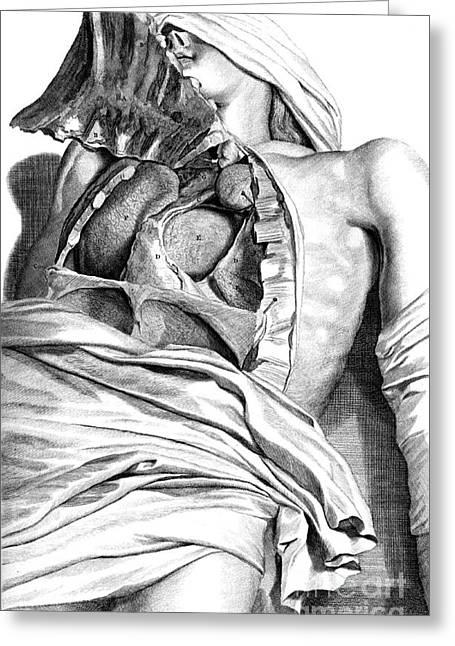 Anatomia Humani Corporis, Table 21, 1690 Greeting Card by Science Source