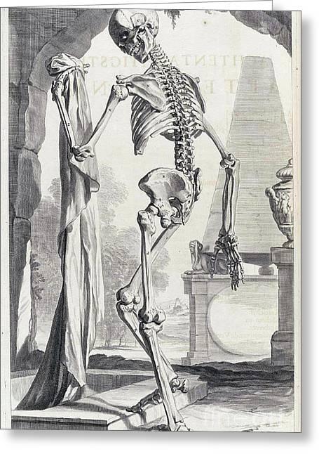 Anatomia Humani Corporis, Table 88, 1690 Greeting Card by Science Source