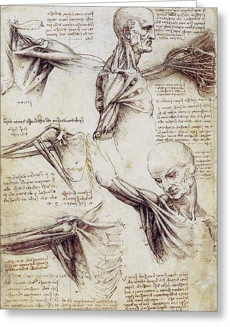 Anatomical Studies Of The Shoulder Greeting Card by Leonardo da Vinci