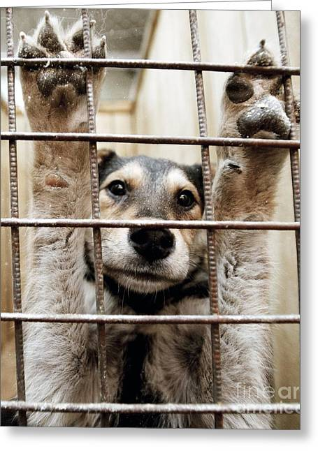 Animal Shelter, Russia Greeting Card by RIA Novosti