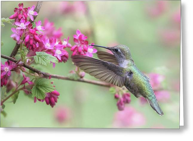 Greeting Card featuring the photograph Anna In Spring by Angie Vogel