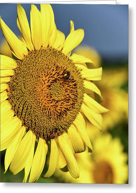 Another Sunny Day Greeting Card