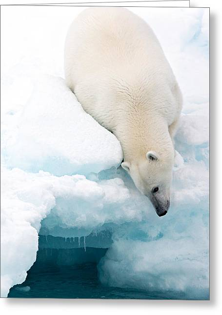 Arctic Composition Greeting Card by Marco Gaiotti