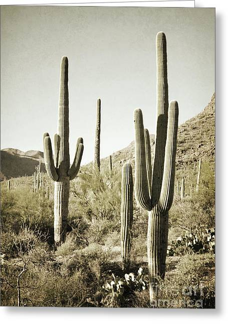 Greeting Card featuring the photograph Arizona Cactus Pair Desert by Andrea Hazel Ihlefeld