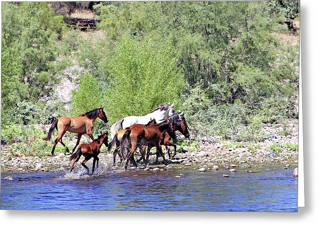 Arizona Wild Horses Greeting Card