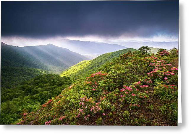 Asheville Nc Blue Ridge Parkway Spring Flowers North Carolina Greeting Card by Dave Allen