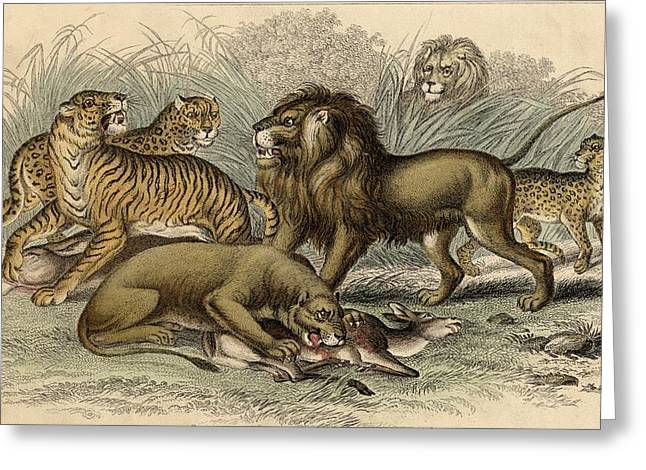 1. Asiatic Lion. 2. Lioness. 3.bengal Greeting Card by Vintage Design Pics