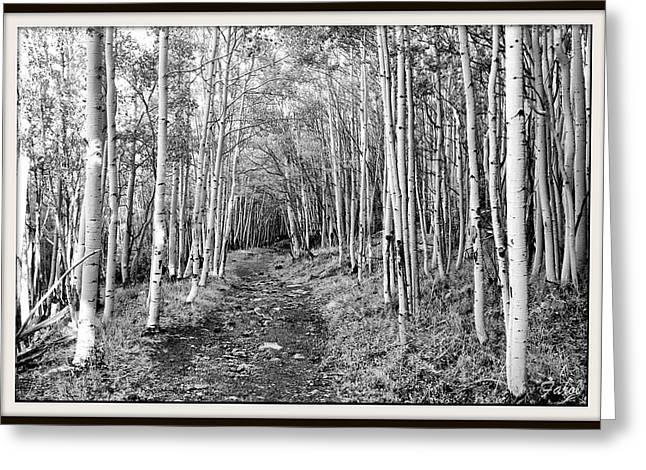 Aspen Forest Greeting Card by Farol Tomson