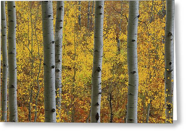 Greeting Card featuring the photograph Aspen In Autumn At Mcclure Pass by Jetson Nguyen