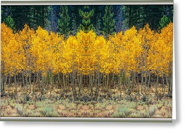 Greeting Card featuring the photograph Aspen Stand by Sherri Meyer