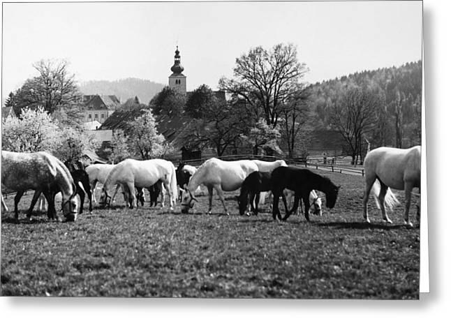 Austria: Horse Farm Greeting Card