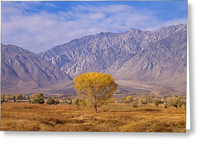 Autumn Color Along Highway 395, Sierra Greeting Card