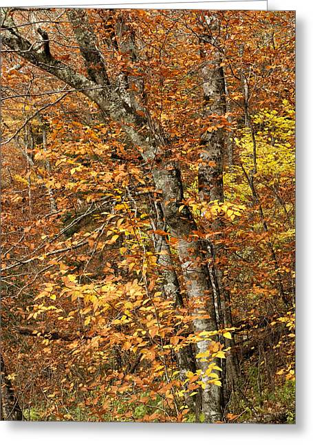 Autumn Photographs Photographs Greeting Cards - Autumn Colors Greeting Card by Andrew Soundarajan