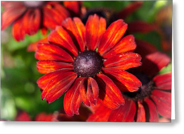 Greeting Card featuring the photograph Autumn Flowers by Jeremy Hayden