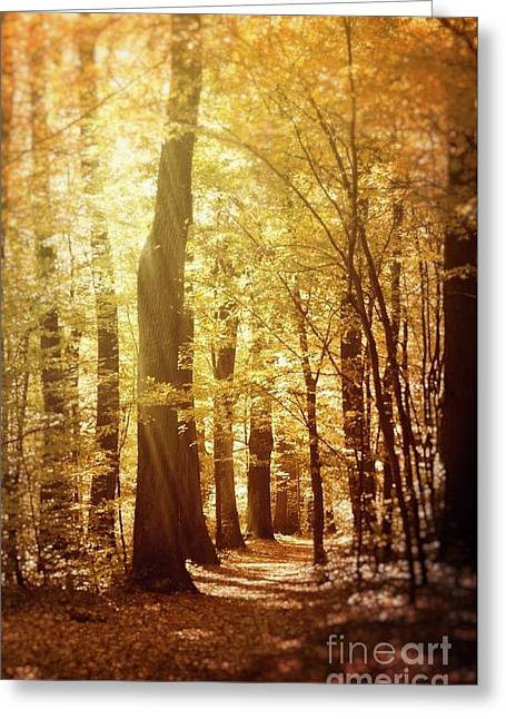 Autumn Forest Greeting Card by Mythja Photography