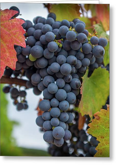 Autumn Grapes On The Vine Greeting Card