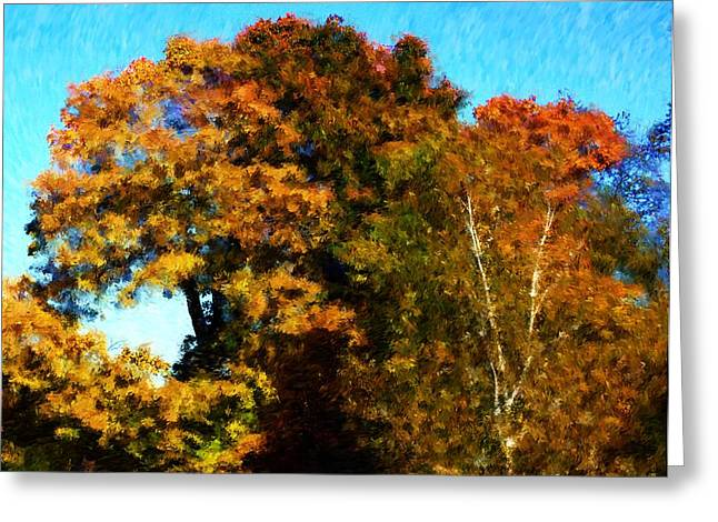 Autumn Leaves Greeting Card by David Lane