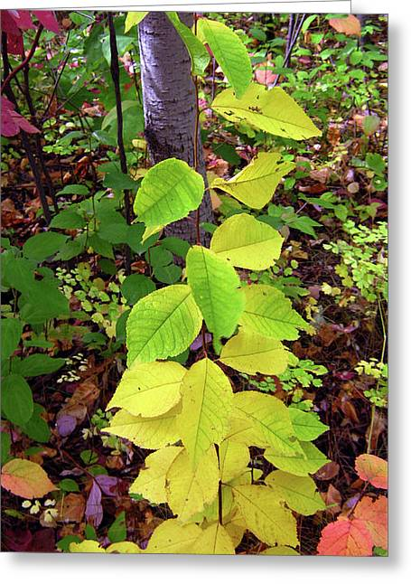Autumn Leaves II Greeting Card