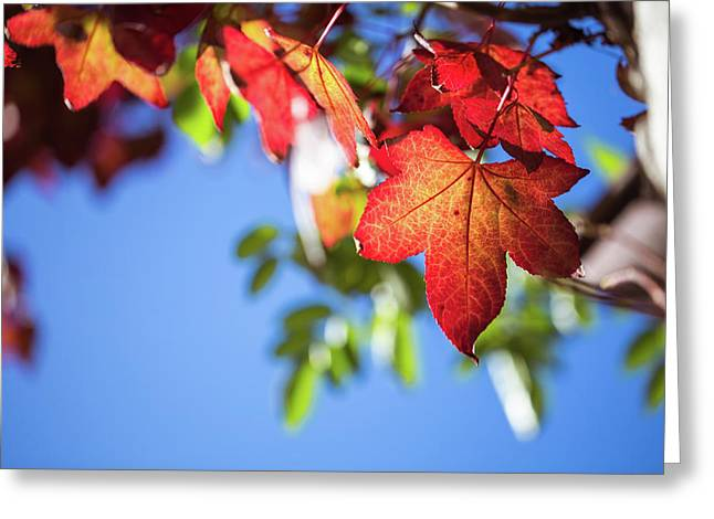 Greeting Card featuring the photograph Autumn Leaves  by Jingjits Photography