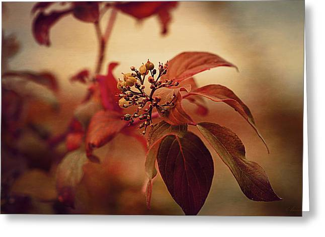Autumn Leaves Greeting Card by Maria Angelica Maira