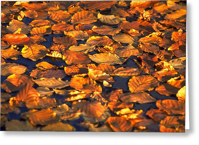 Autumn Leaves Greeting Card by Michael Mogensen