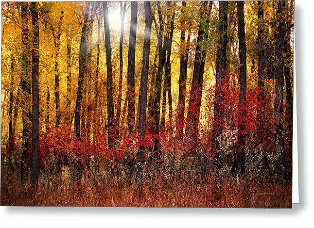 Autumn Light Greeting Card