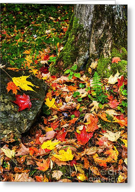 Autumn Monongahela National Forest Greeting Card by Thomas R Fletcher