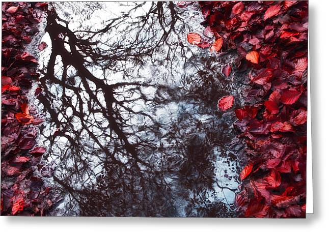 Red Photographs Digital Greeting Cards - Autumn reflections II Greeting Card by Artecco Fine Art Photography