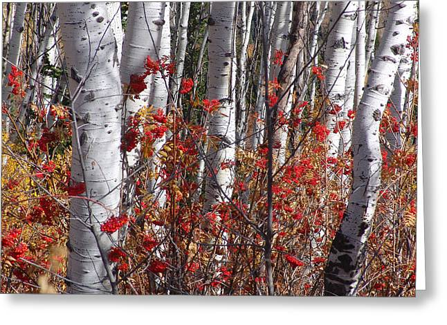 Autumn Splender Greeting Card
