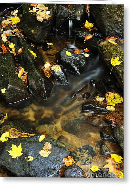 Autumn Stream Monongahela National Forest Greeting Card by Thomas R Fletcher